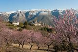Guadalest at Almond blossom