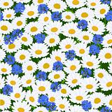 Seamless camomiles and cornflower pattern