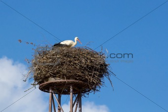a mother white stork bird on a chimney