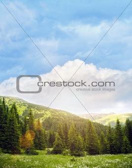 Mountain glade