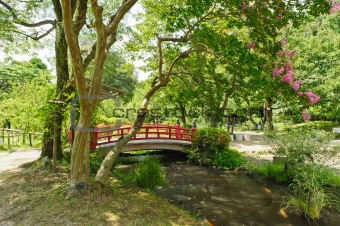 Beautiful Japanese garden