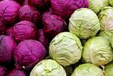 white and purple cabbage