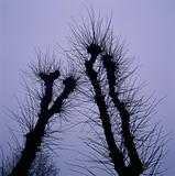Pruned trees