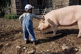 Girl trying to brush a pig