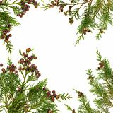 Cypress Leaf Border
