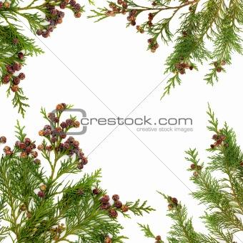 Cypress Leaf Border