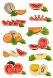 Melon Fruit Collection