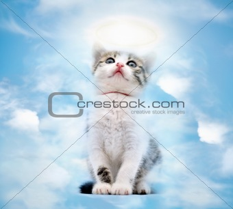 Cat in heaven