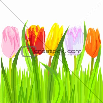 vector of colorful spring tulips in grass