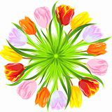 vector round card of colorful spring tulips in grass