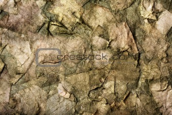 background of the old dry leaves in a dirty-green hues