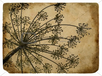 old paper with floral element dill