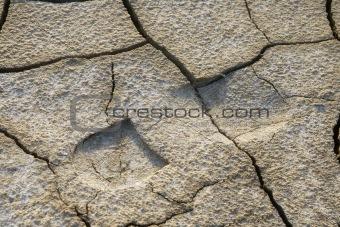 Footprint in dried earth