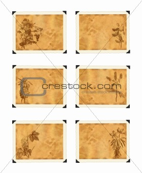 old paper with plants in vintage style graphics.