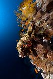 Tropical underwater world in the Red Sea.
