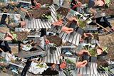 collage gardener