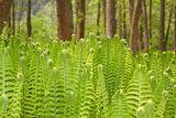 Closeup of a Green Fern