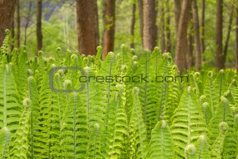 Closeup of a Green Fern