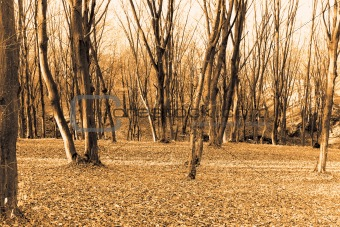 Autumn forest. Sepia