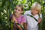 Children playing in corn plants