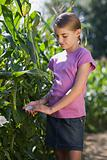 Girl touching a flower near corn plants