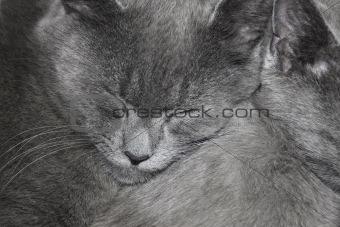 Gray cats are sleeping