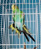 Flying Pet Bird