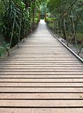 Rope walkway through the treetops
