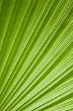Green palm tree leaf