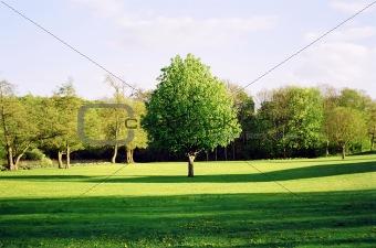 Green tree in Denmark