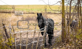 Skinny Horse outside in fenced yard area