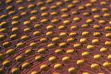 porous wood detail