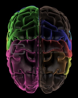Coloured areas of the Brain, top view