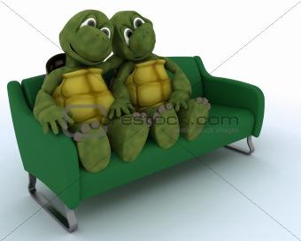 tortoise on a sofa