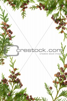 Cypress and Pine Cone Border