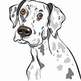 vector sketch dog Dalmatian breed closeup portrait
