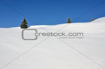 Three fir trees on snowy hills