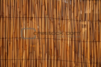 Close up of a bamboo fence, lit by warm evening sunlight.