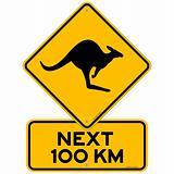 Kangaroos Next 100 km