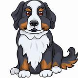 vector cute Bernese Mountain dog puppy smiles