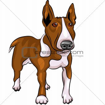 vector cartoon Bull Terrier Dog breed