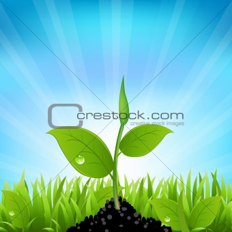 Beams And Grass
