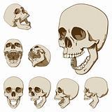 Seven skulls set