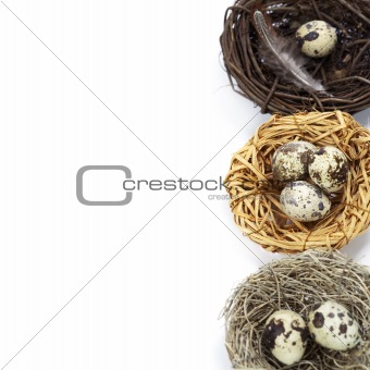 quail eggs in nests