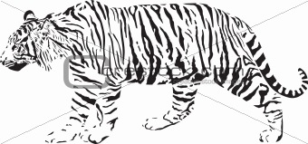 Tiger - Black and white vector illustration