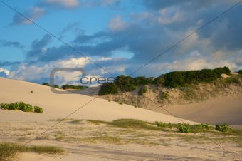 Sand dunes with grass and bush