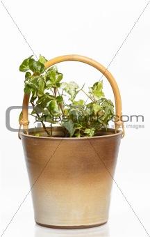 houseplants in flower pot