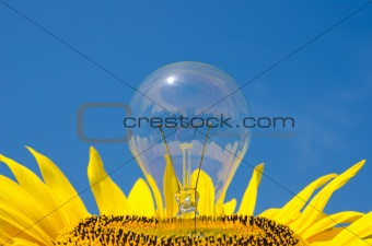 light bulb and sunflower
