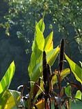 Sunlight Plants