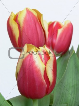Bouquet red yellow tulips